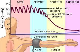 Blood pressure 4